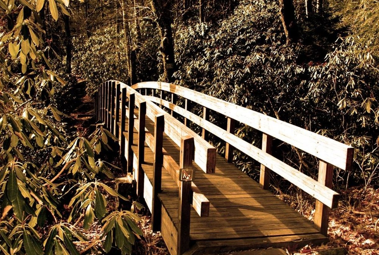 Golden sun-lit bridge in the woods on the Tanawha Trail at the Blue Ridge Parkway