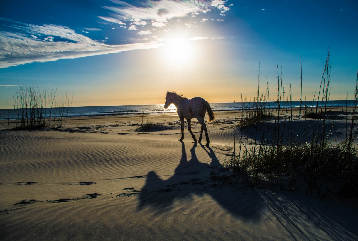 Horse walking on a sandy beach with the sun rising into the blue sky behind it