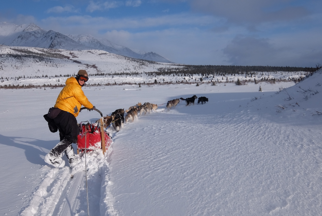 Ranger Jennifer Raffaeli with sled dogs at Denali National Park