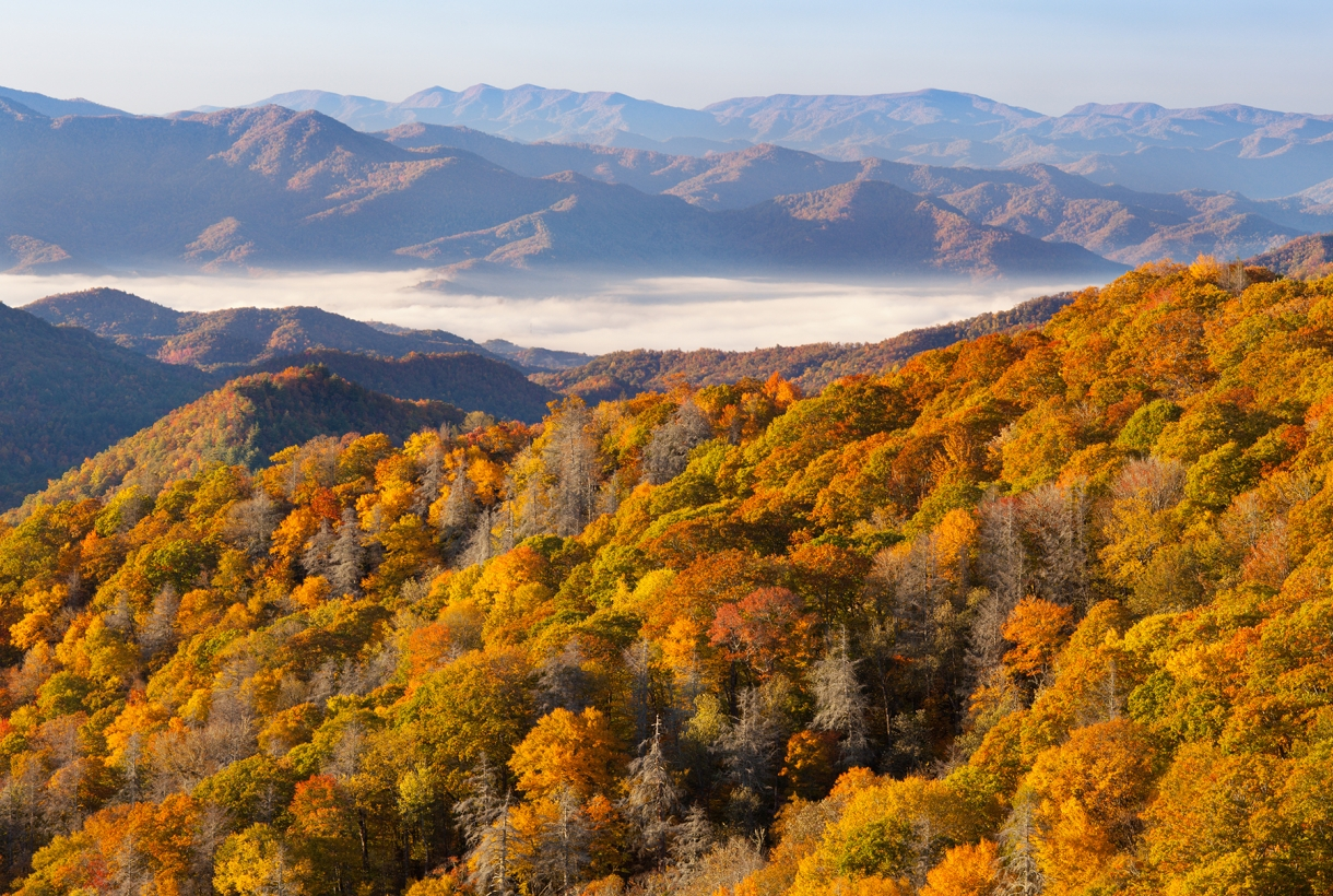 Aerial view of orange foliage at Great Smoky Mountains National Park