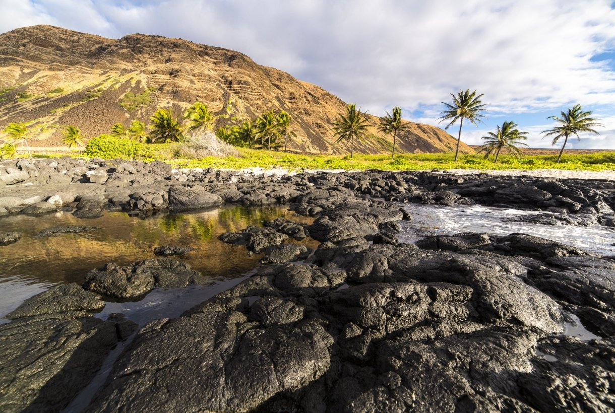 Tidepools in the foreground reach into the distance, where a line of palm trees can be seen