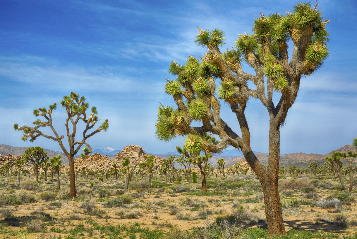 Sunny day at Joshua Tree National Park