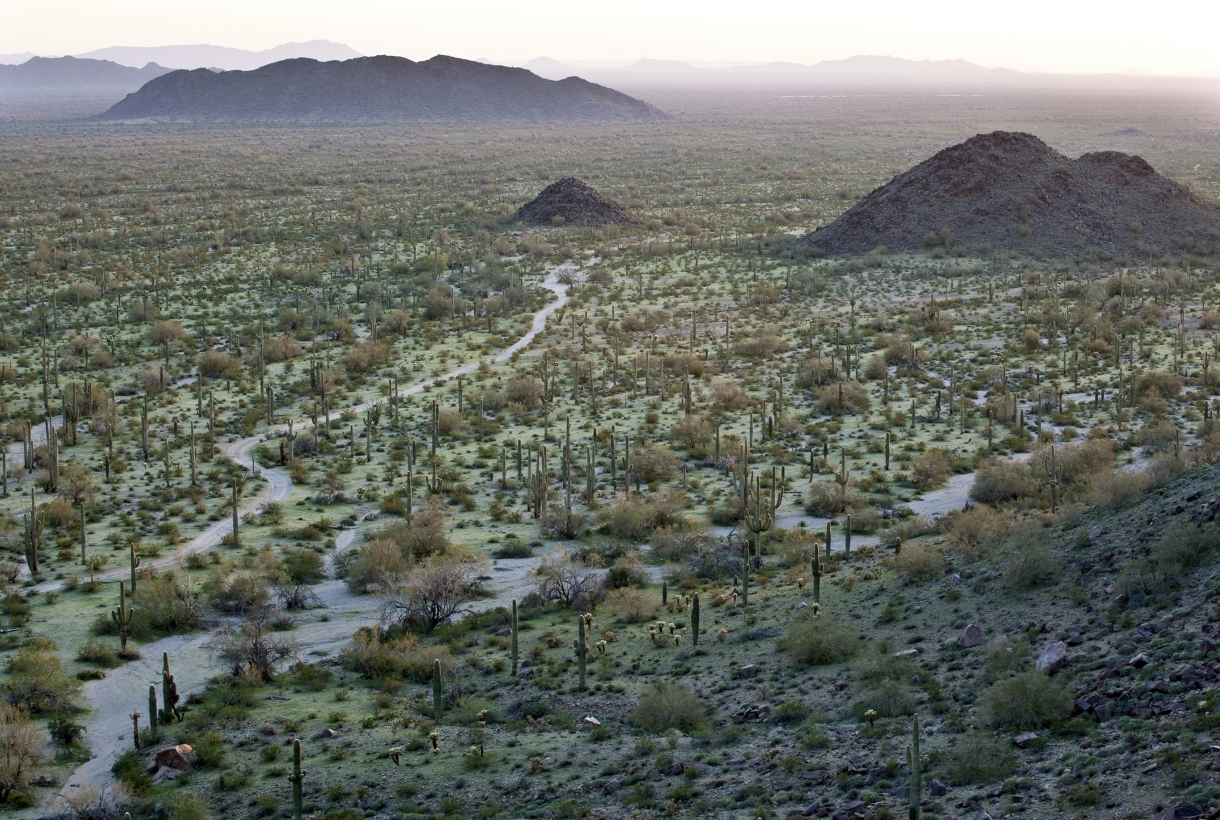 A mountain top view of a trail. The trail cuts through low grass and shrubbery of the Sonoran Desert with a few mountains in the far background.