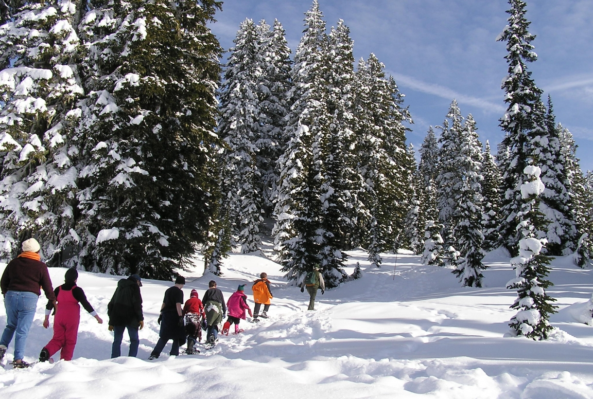 A line of park visitors trek in the thick snow, alongside a ridge of snow-covered pine trees