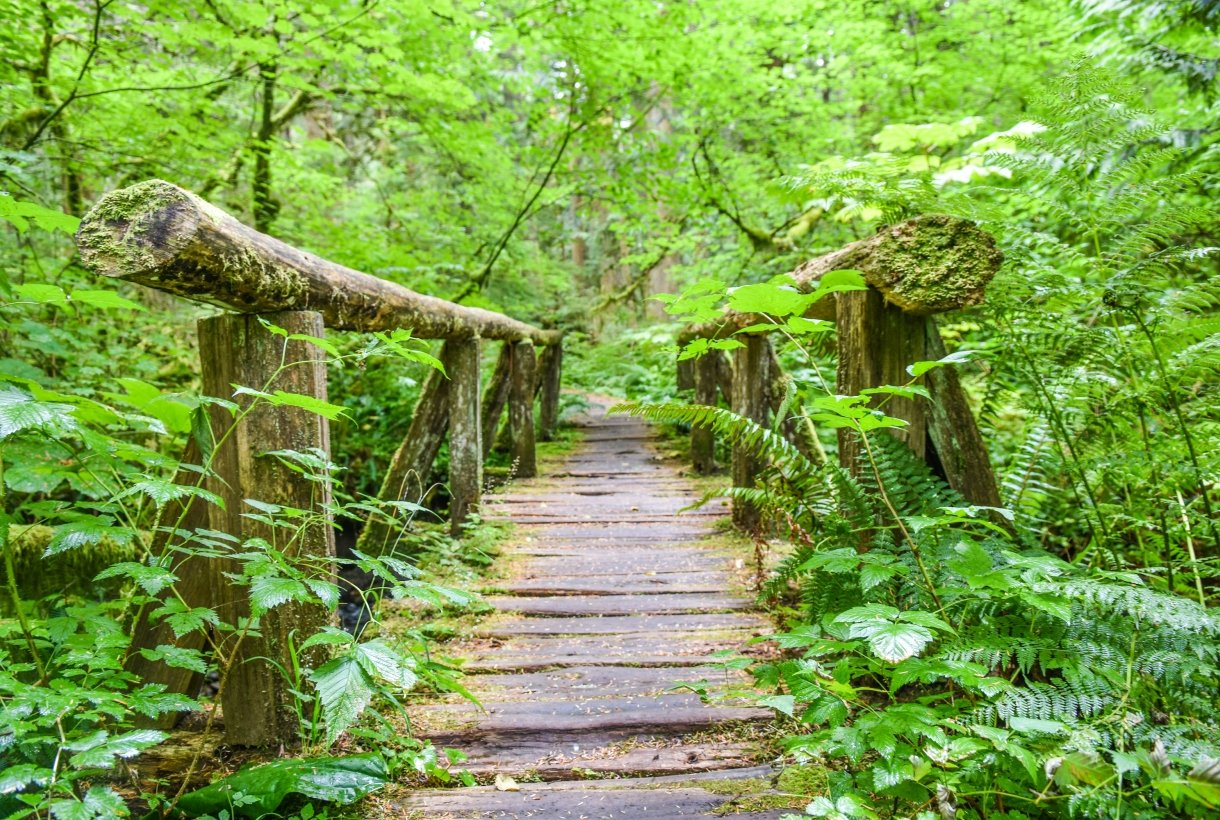 A wooden bridge sits among very green ferns and trees