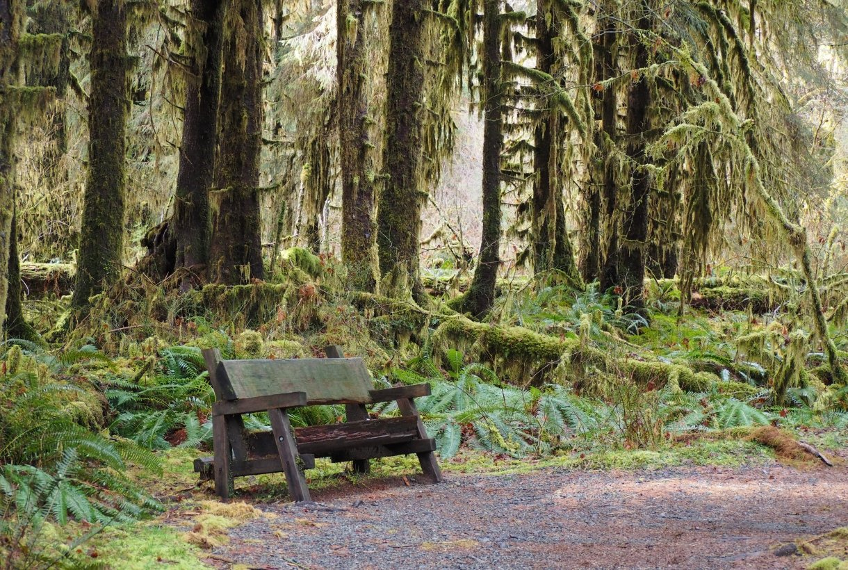 Bench in the Hoh Rain Forest