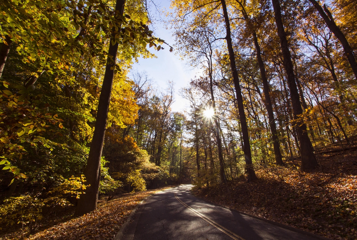 road stretches into forest full of fall foliage in Rock Creek Park