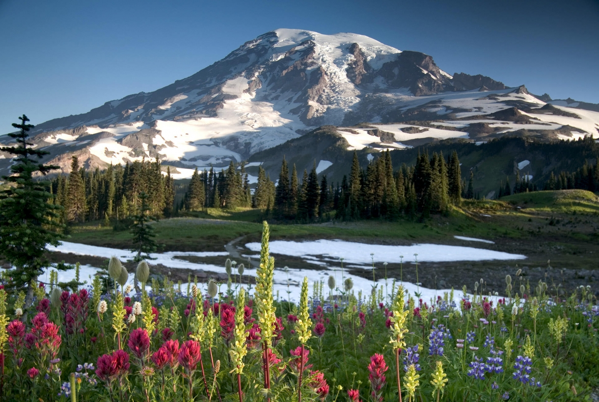 Image of gorgeous Mount Ranier National Park snow-capped mountains and flower fields