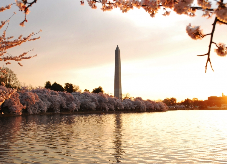 Cherry blossoms at the Tidal Basin at sunrise with the Washington Monument