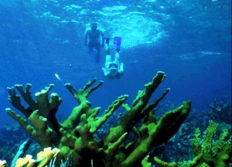 Snorkelers and coral in the shallow waters of Biscayne National Park