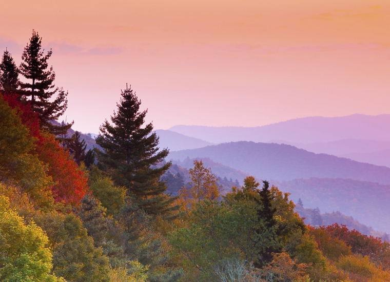 Colorful fall leaves at the Great Smoky Mountains