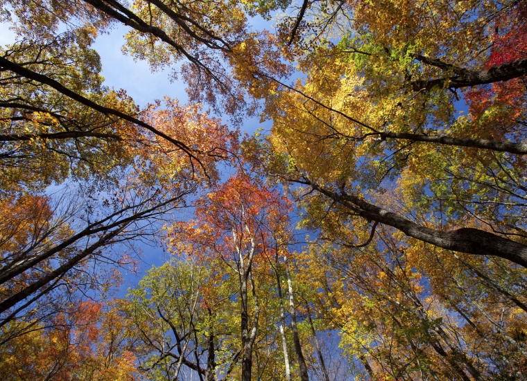 Fall tree cover in Great Smoky Mountain National Park