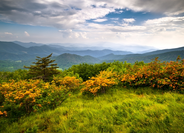 Orange flowers blooming along the lush Appalachian National Scenic Trail