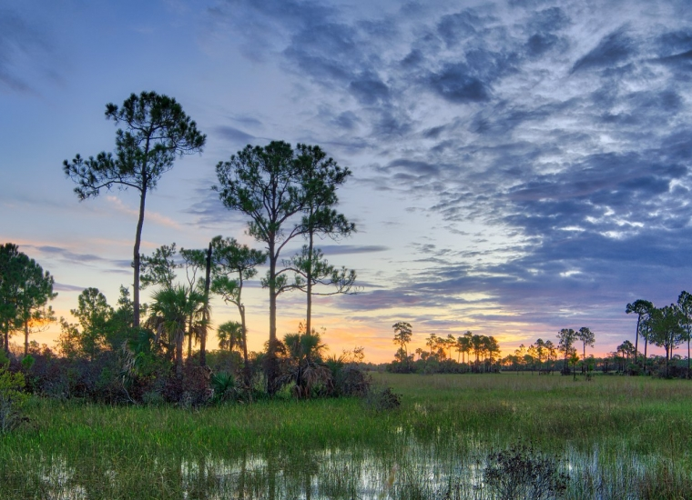 Big Cypress National Preserve, Pine Oak Road view
