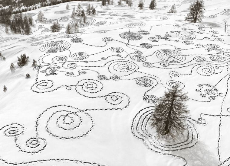 a snowy meadow full of snowshoe tracks