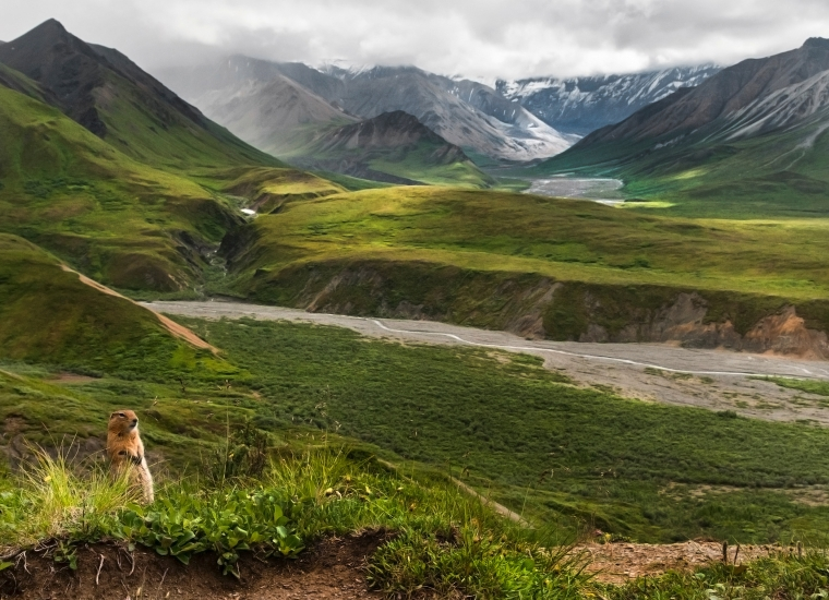 a small ground squirrel standing on its hind legs, with dramatic green and brown mountains in the distance behind it
