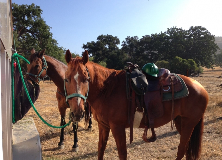 Two horses reined to a post, one staring at the camera at Santa Monica Mountains National Recreation Area