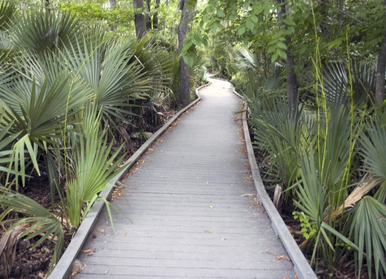 Walkway lined with palm fronds through a lush variety of greenery in Jean Lafitte National Historical Park and Preserve