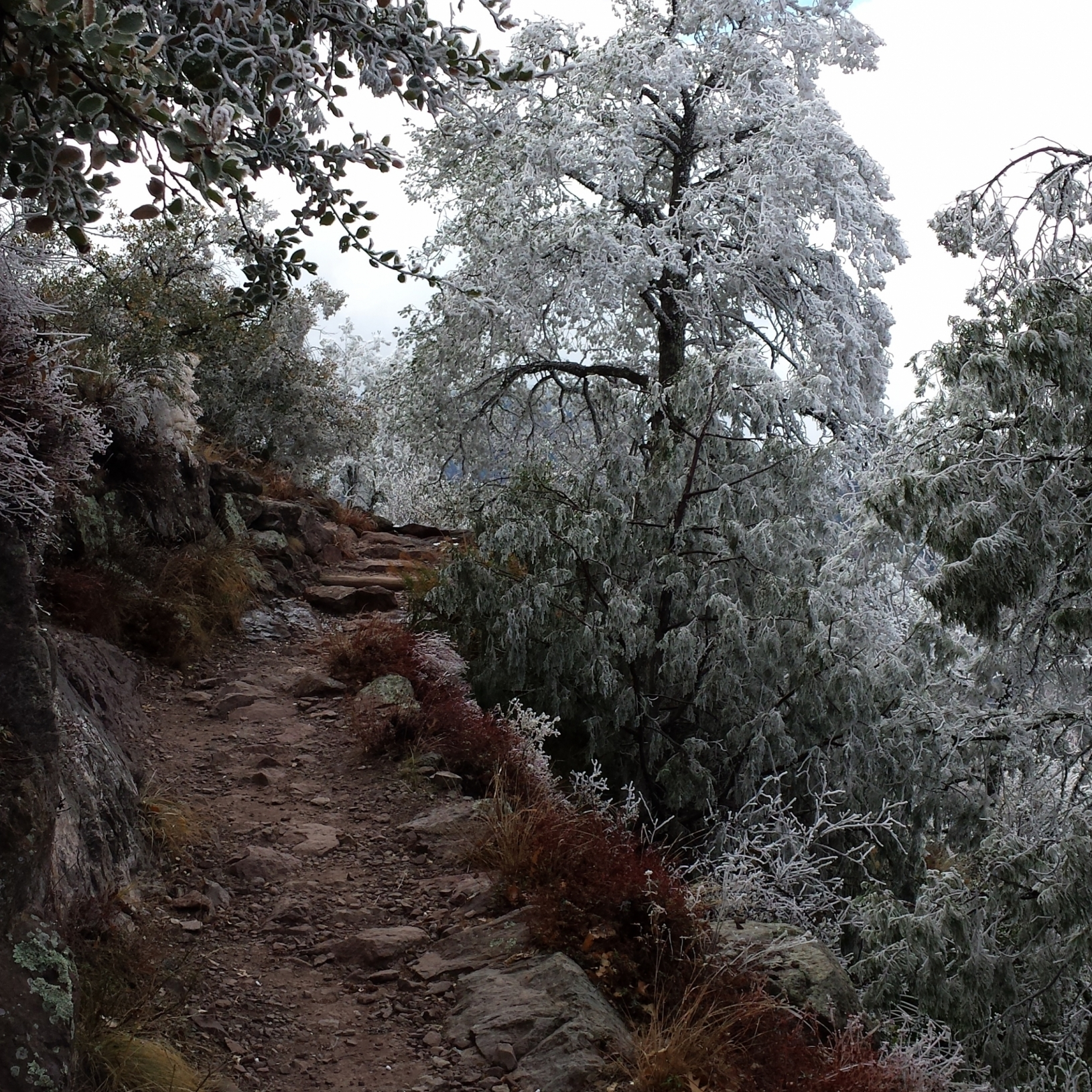 Snowy trail in the Chisos Mountains of Big Bend