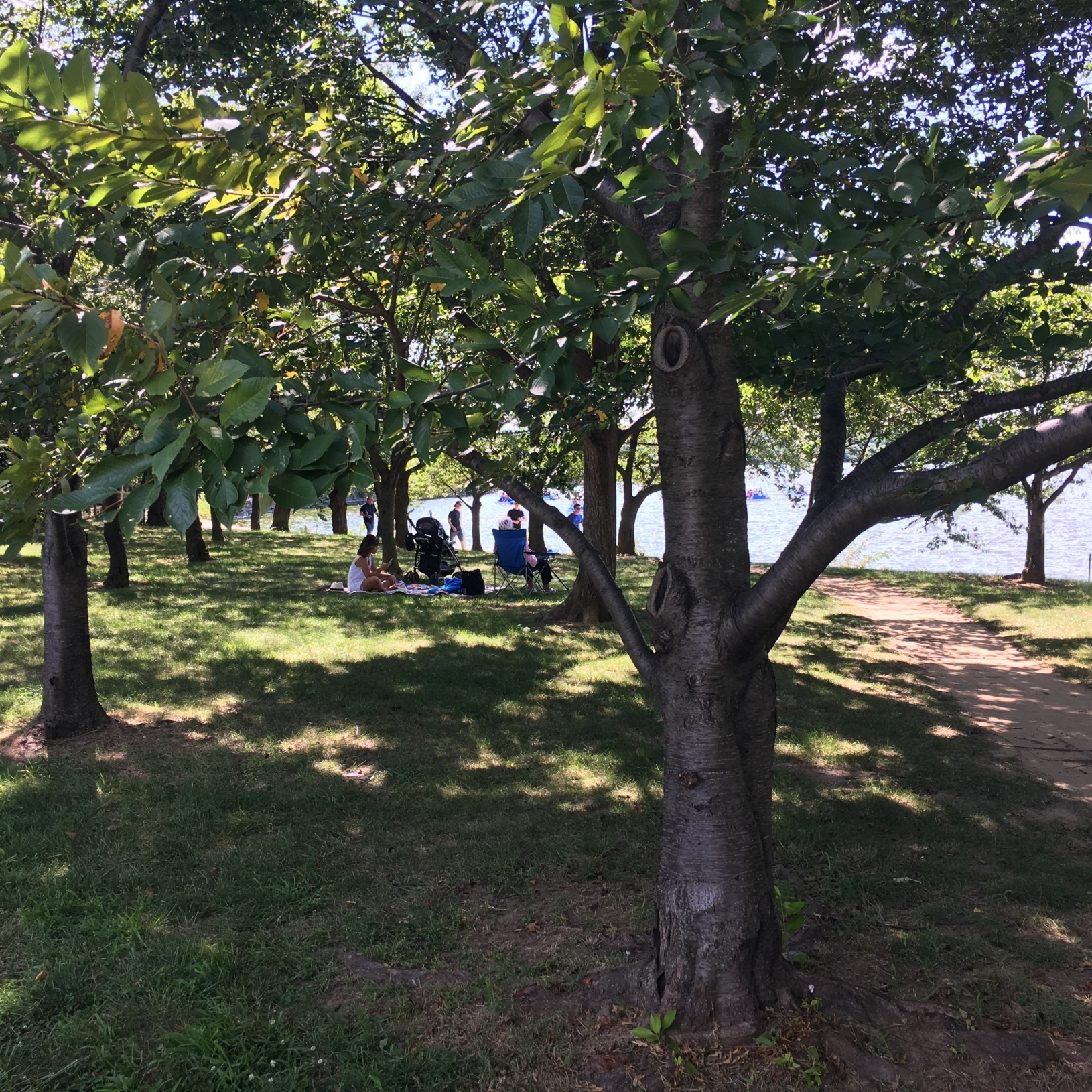 Picnics and strolls under the grove of Cherry Trees by the Jefferson Memorial.