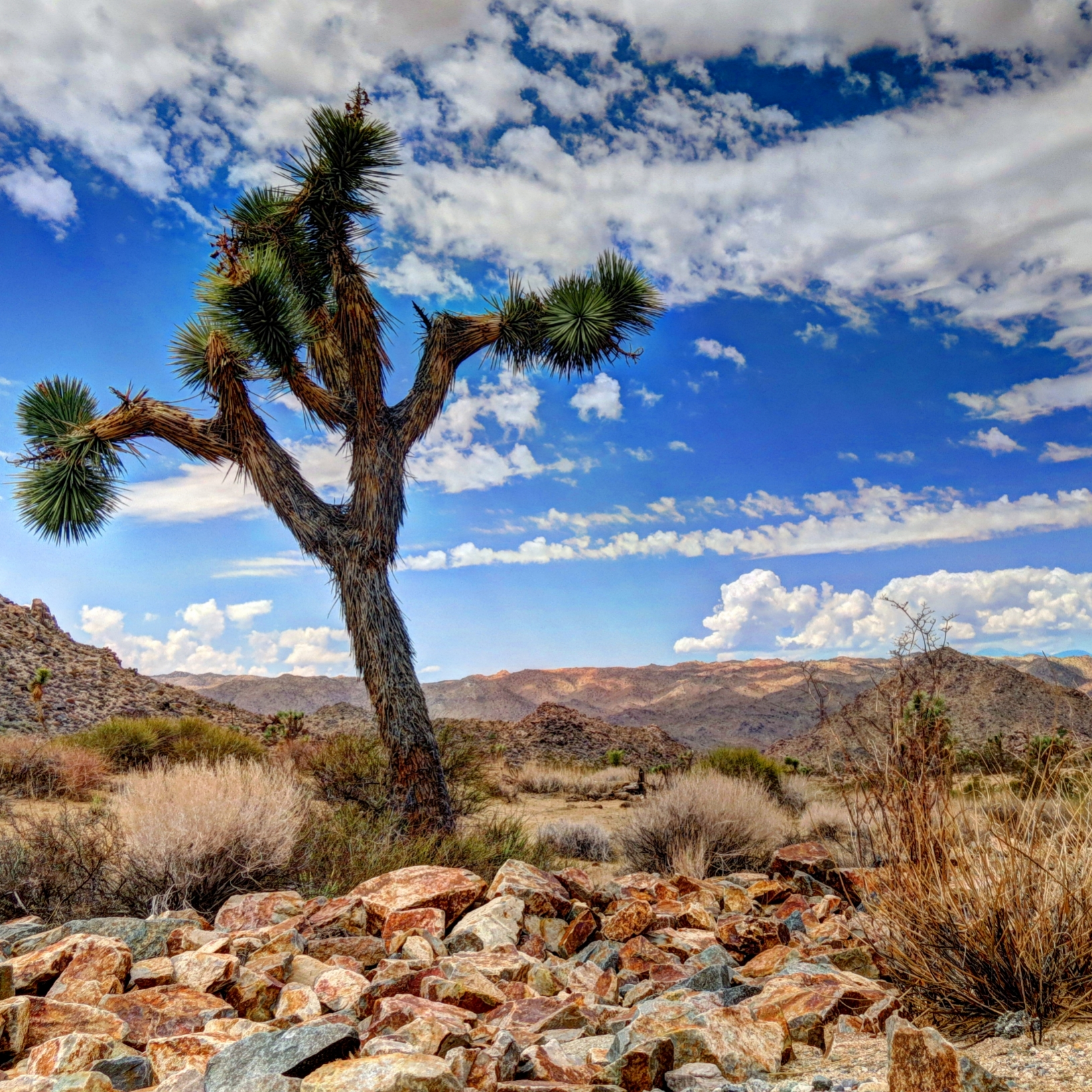 joshua tree girls Joshua tree is safer than 17% of the cities in the united states in joshua tree you have a 1 in 28 chance of becoming a victim of any crime the number of total year over year crimes in joshua tree has decreased by 6.
