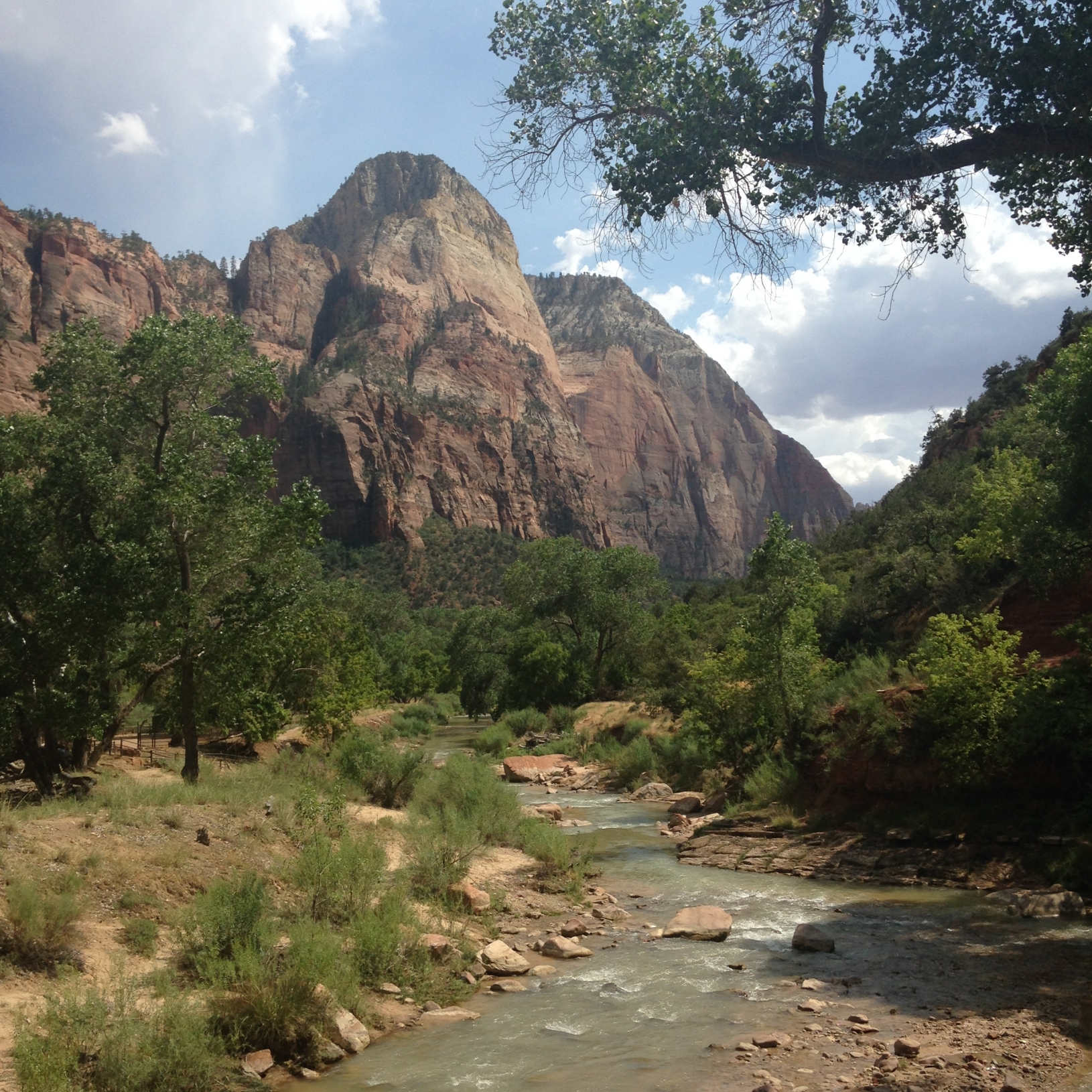 Watchman in Zion National Park