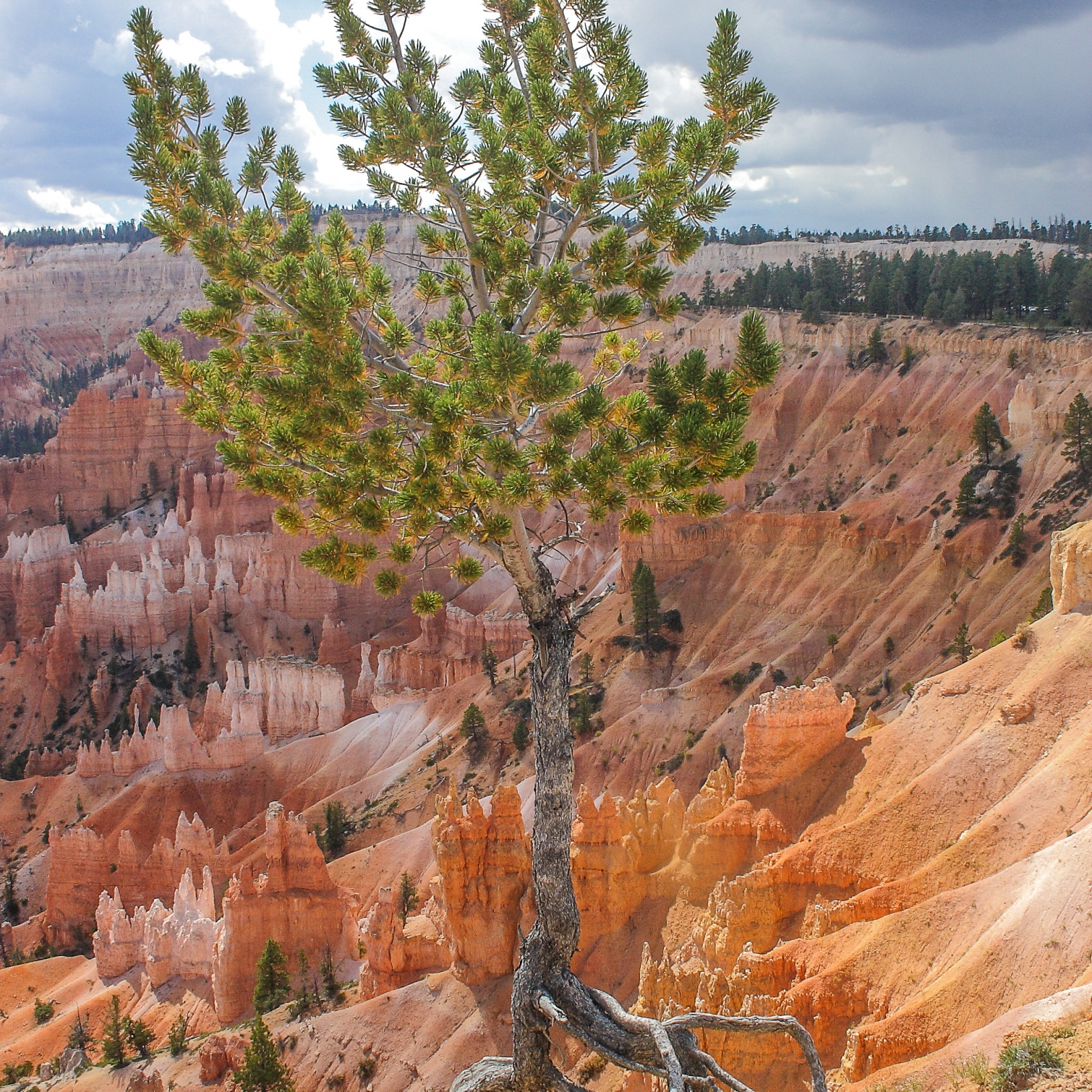 An image of the beautiful Bryce Canyon from Navajo Loop Trail