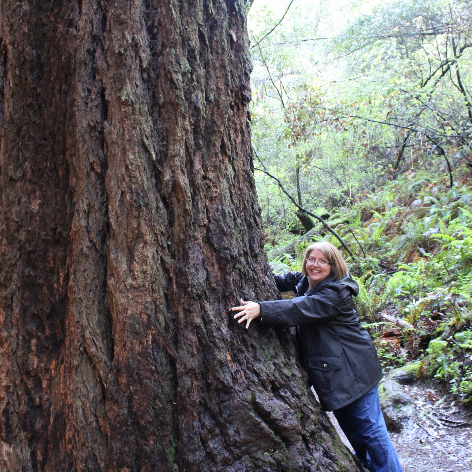 tree-hugging in Muir Woods