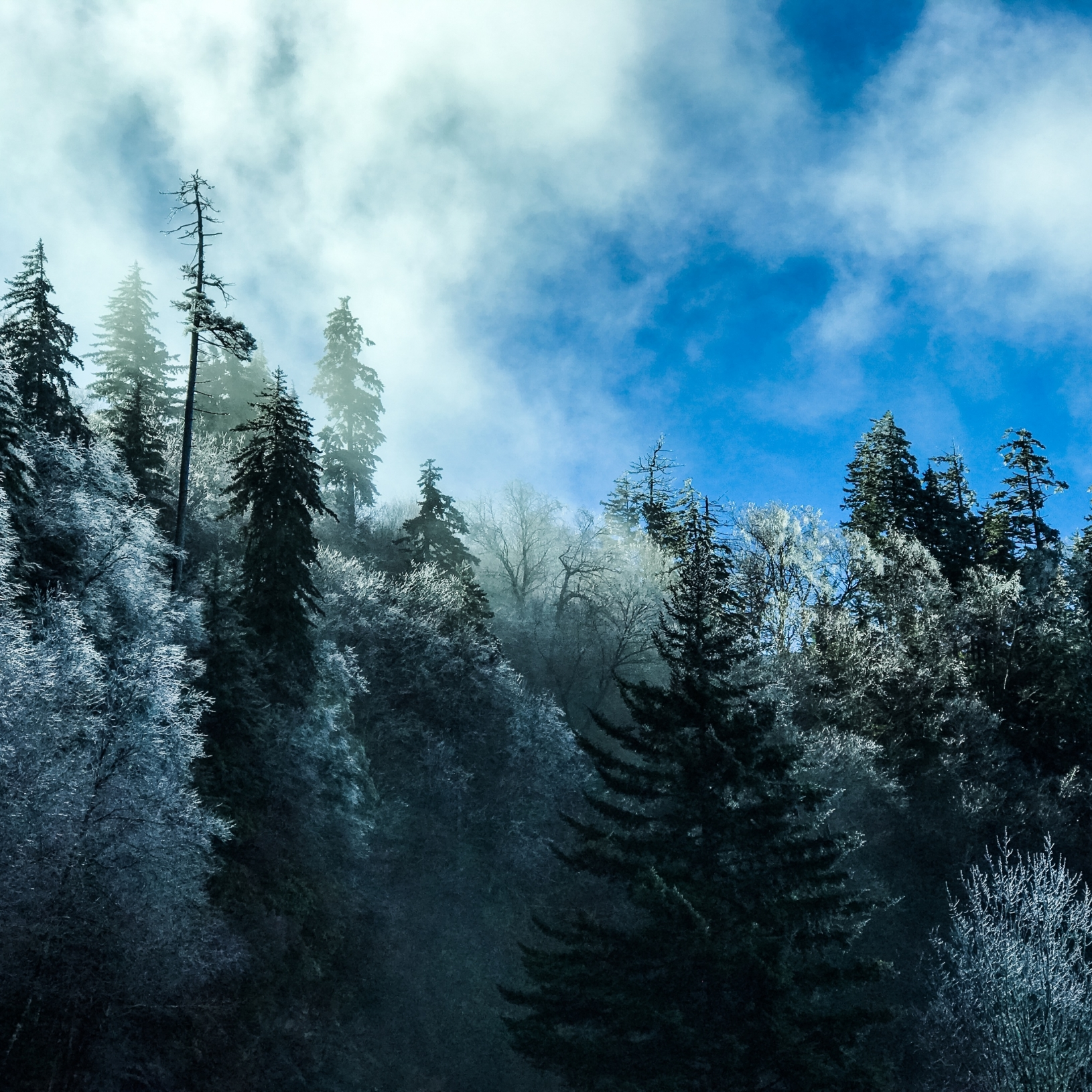 Trees glisten with ice in Great Smoky Mountains National Park