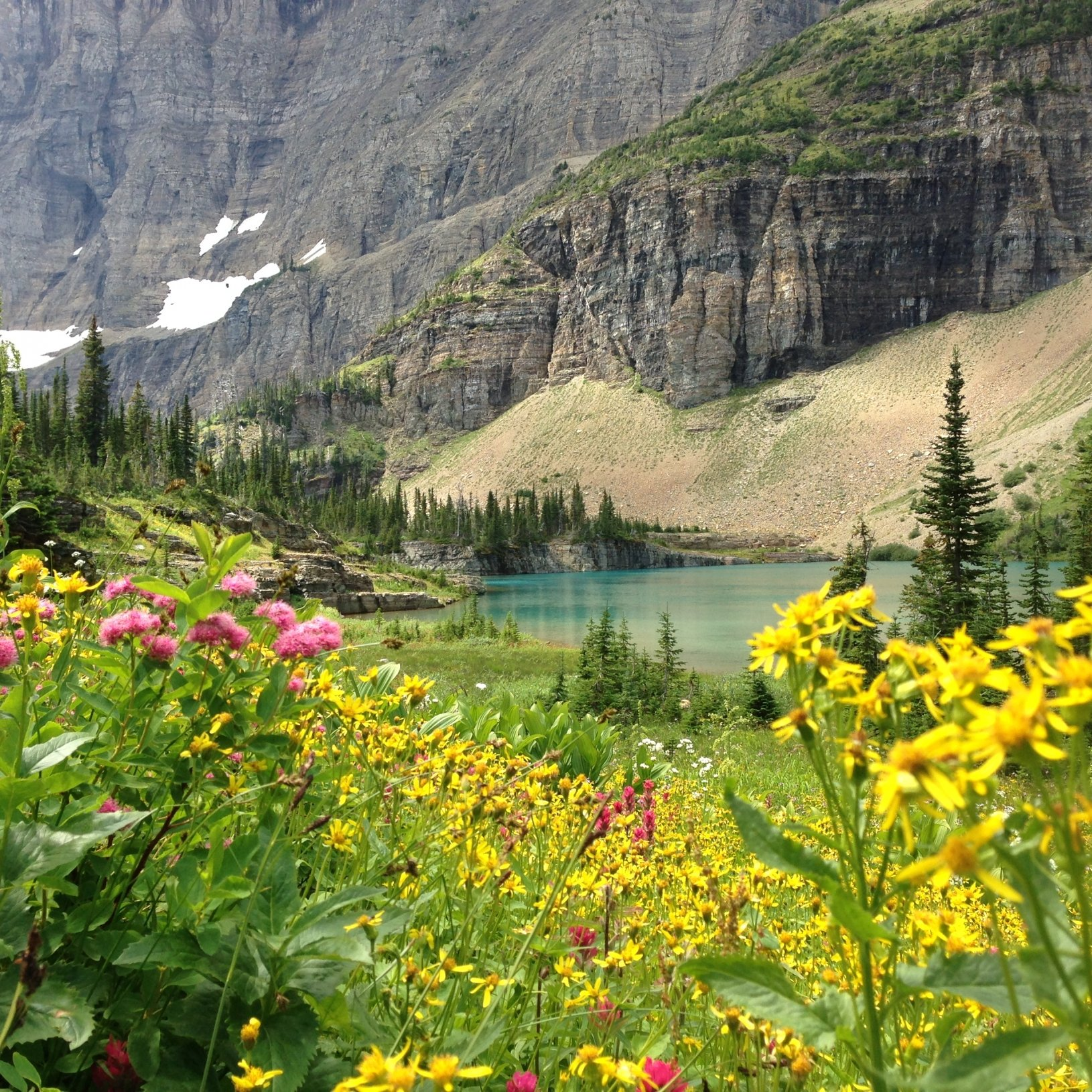 Stream originating from Iceberg Lake with summer wildflower blooms at Glacier NP.