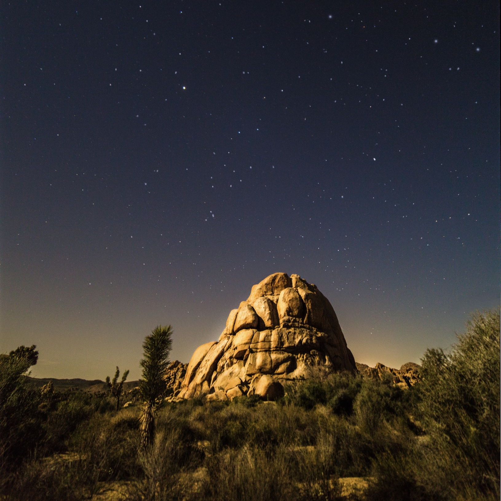 Joshua Tree starscape