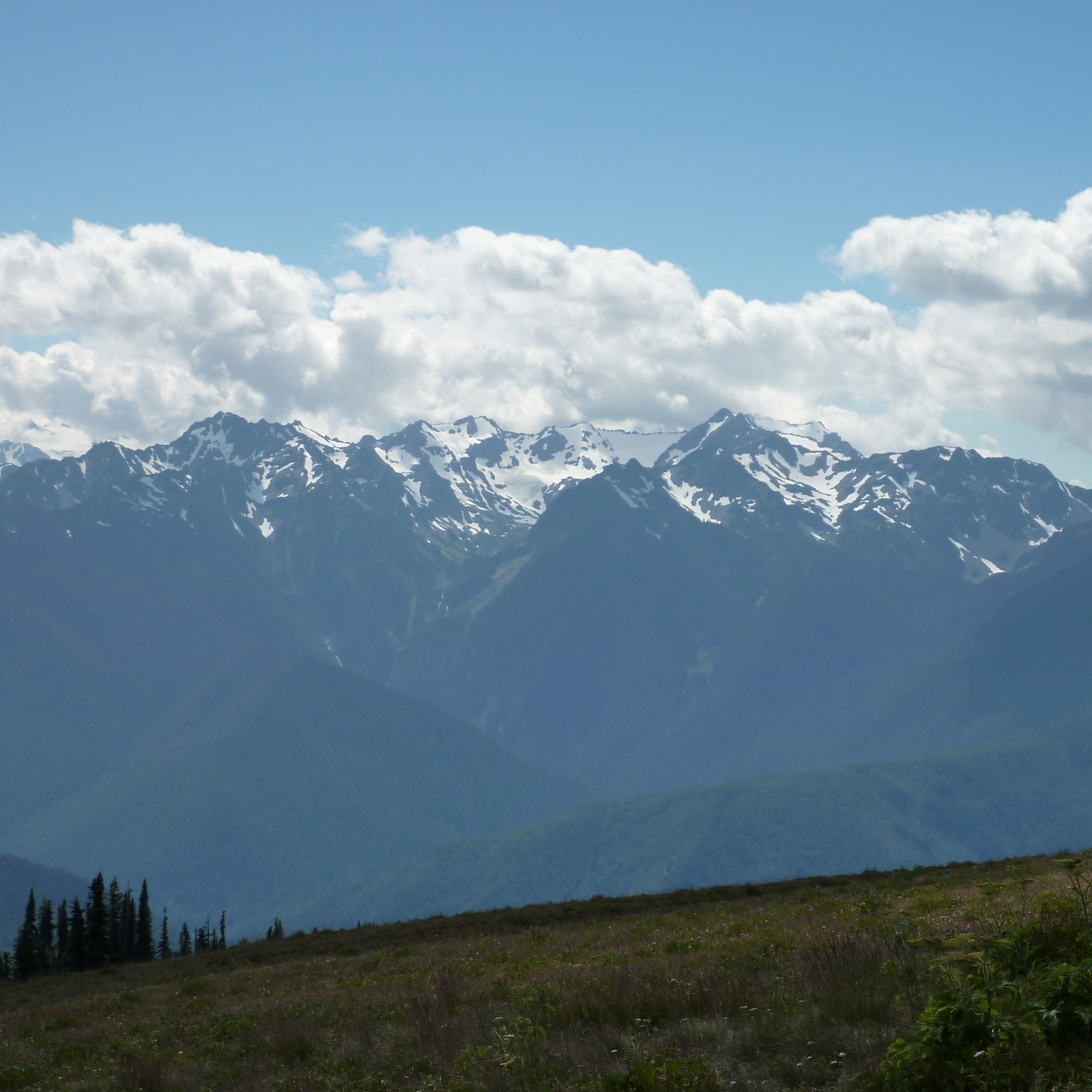 Hurricane Ridge subalpine firs Olympic mountain range with some clouds and blue sky above