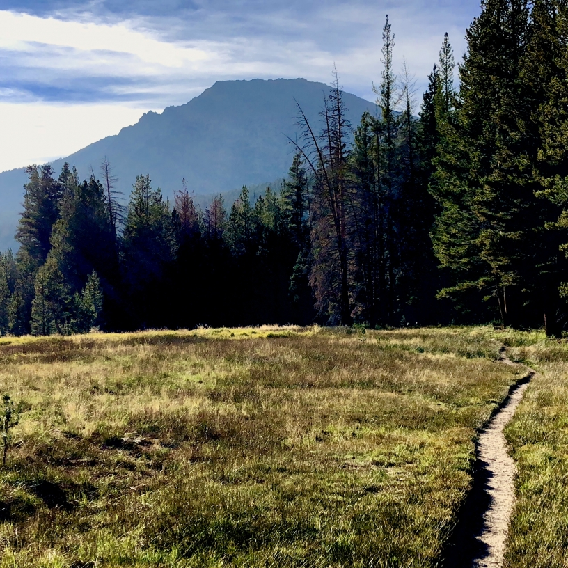 John Muir trail leading to a pine forest through a grassy meadow with a mountain in the distance.