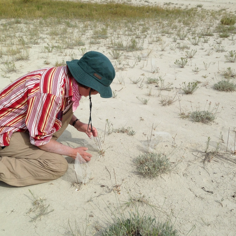 A scientist crouches on the ground, closely studying a plant.