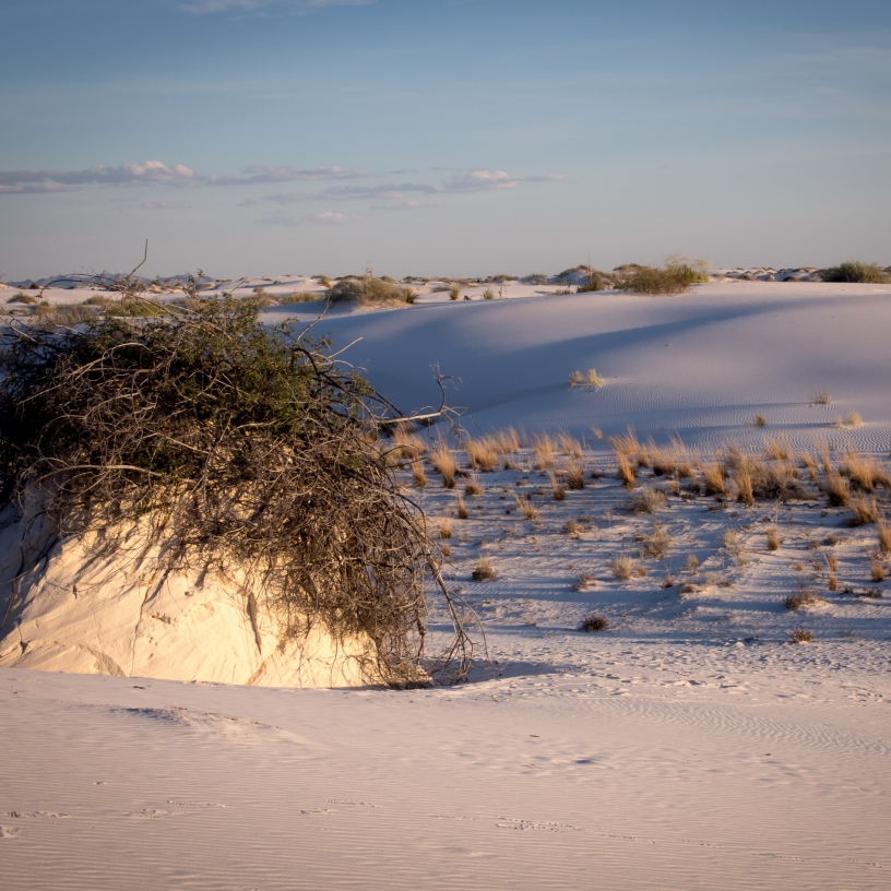 Sumac Pedestal White Sands National Monument