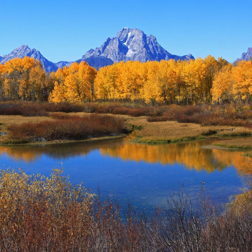 Mount Moran  - fall colors