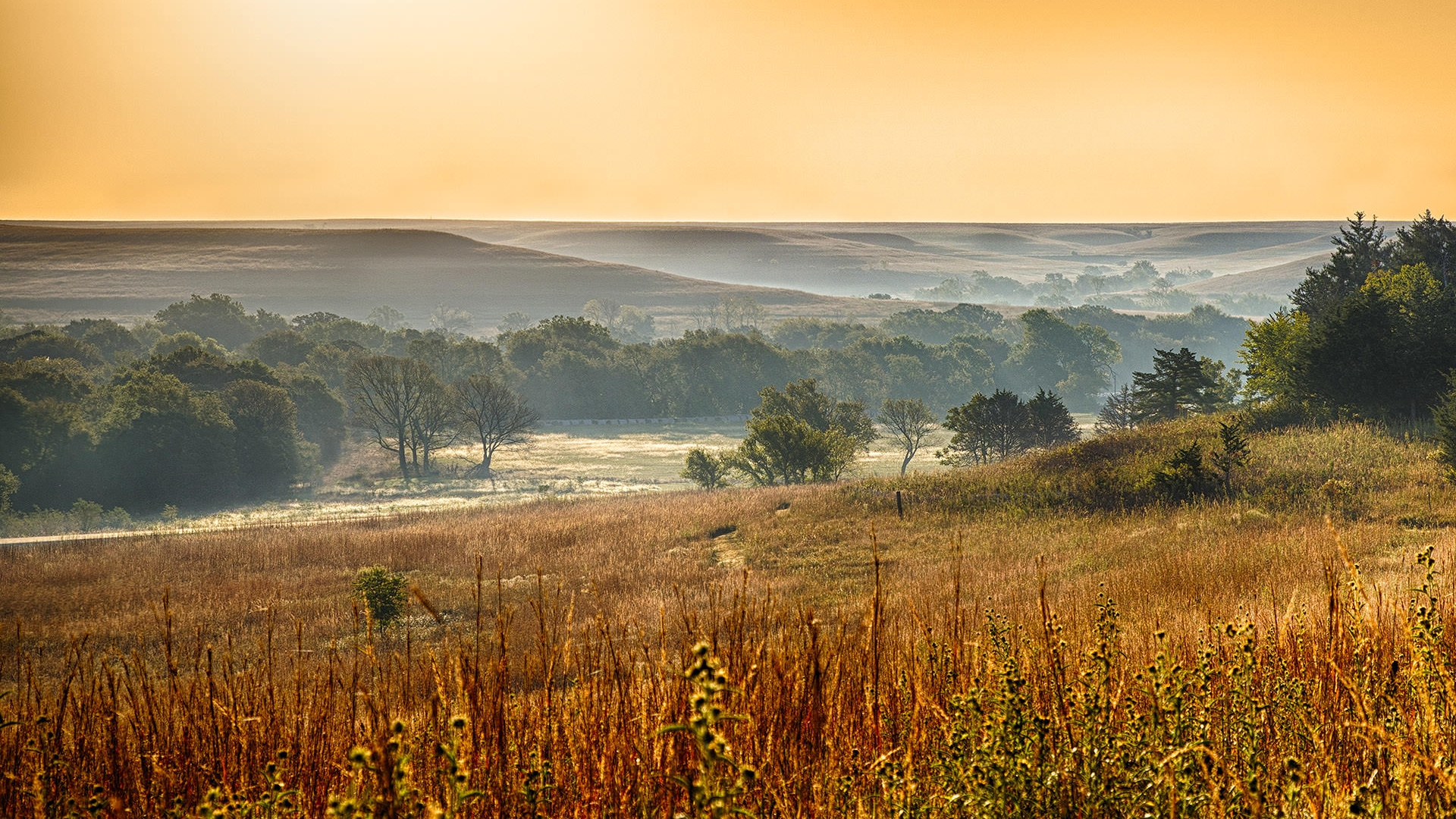 tallgrass prairie Deep in america's heartland, this preserve protects the largest area of tallgrass  prairie remaining on earth though these grasses once covered 170 million.