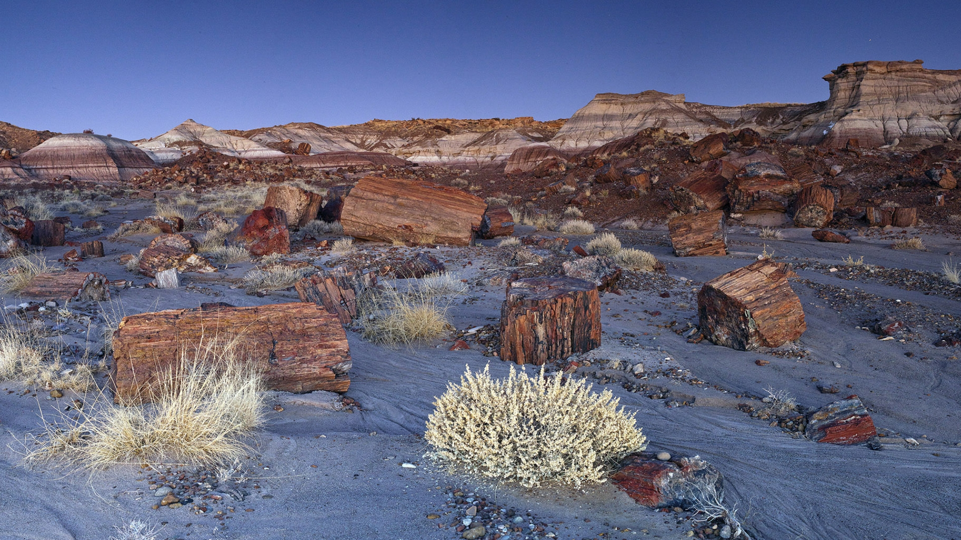 Hotels Near Petrified Forest National Park Az