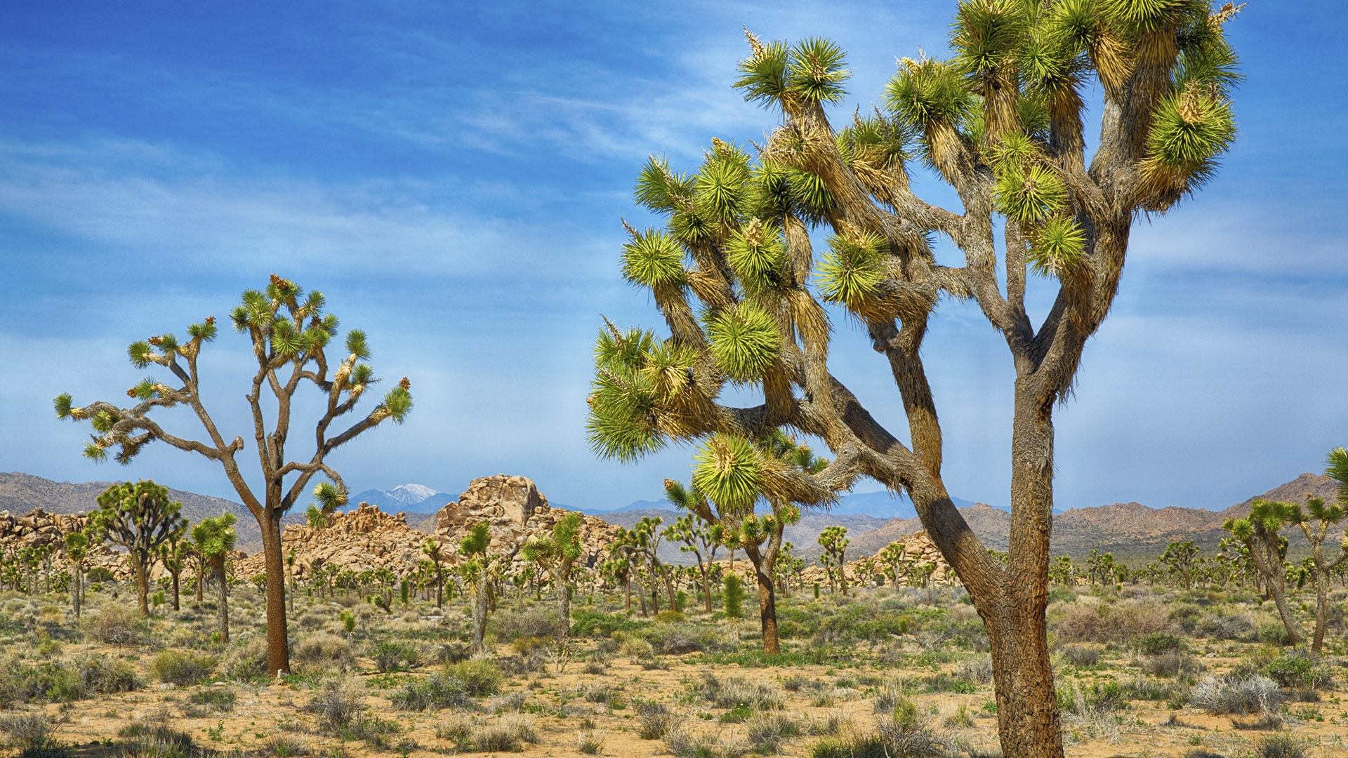 joshua tree national park single personals Free classified ads for personals and everything else find what you are looking for or create your own ad for free.
