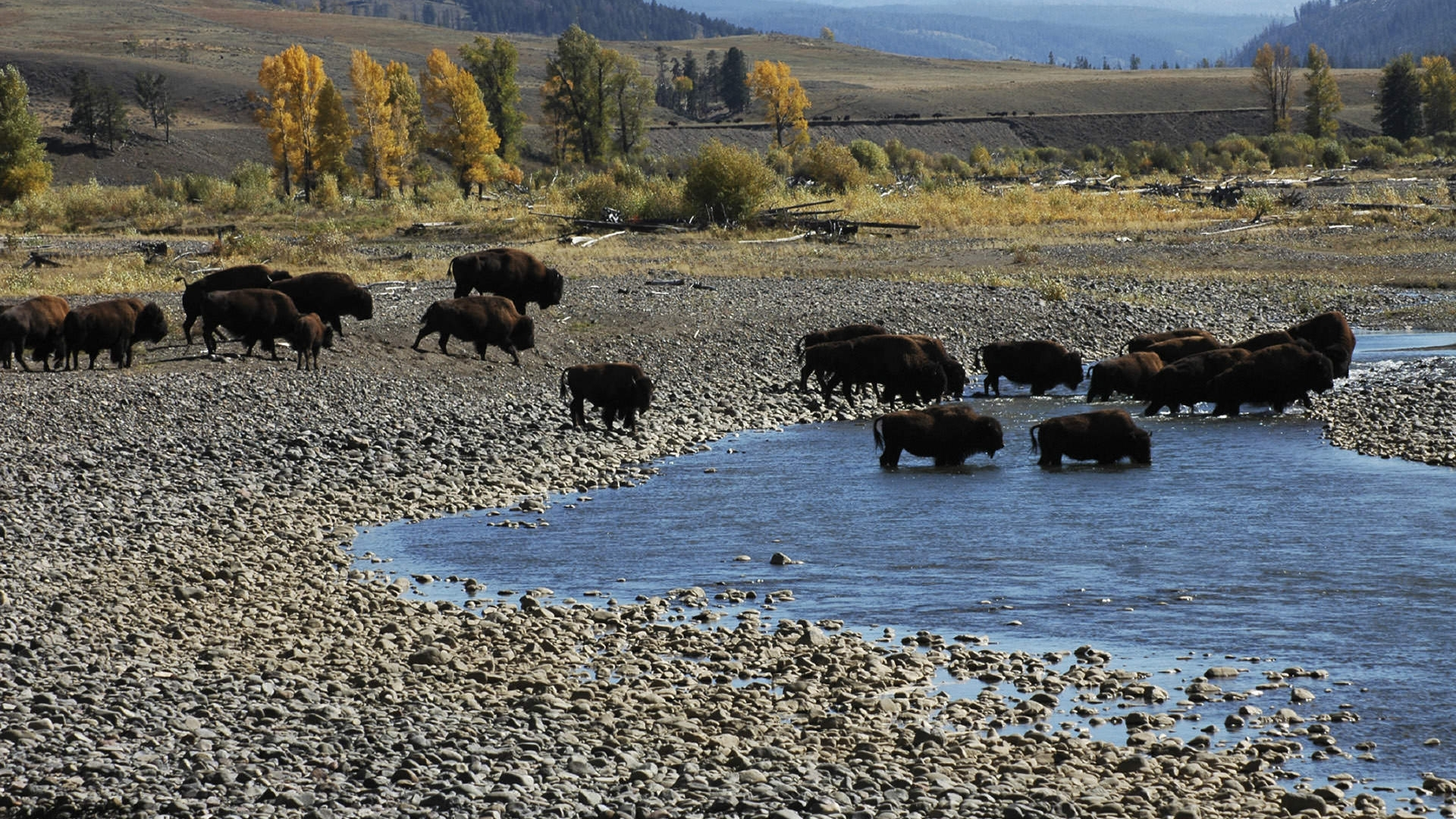 Yellowstone National Park America S First National Park