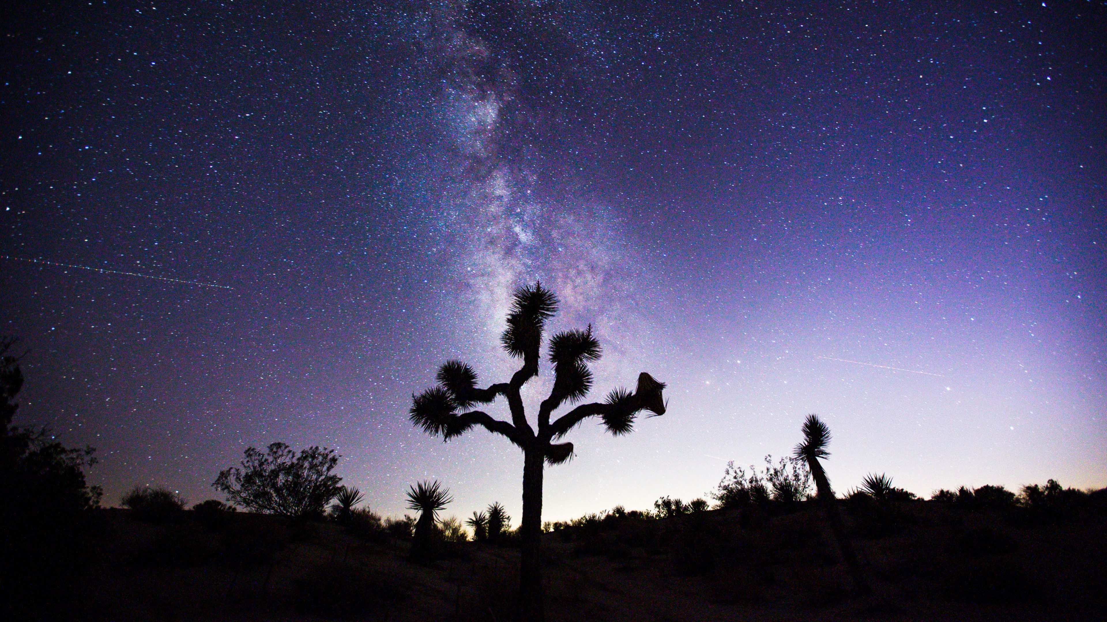 Milky Way behind the silhouette of a Joshua Tree