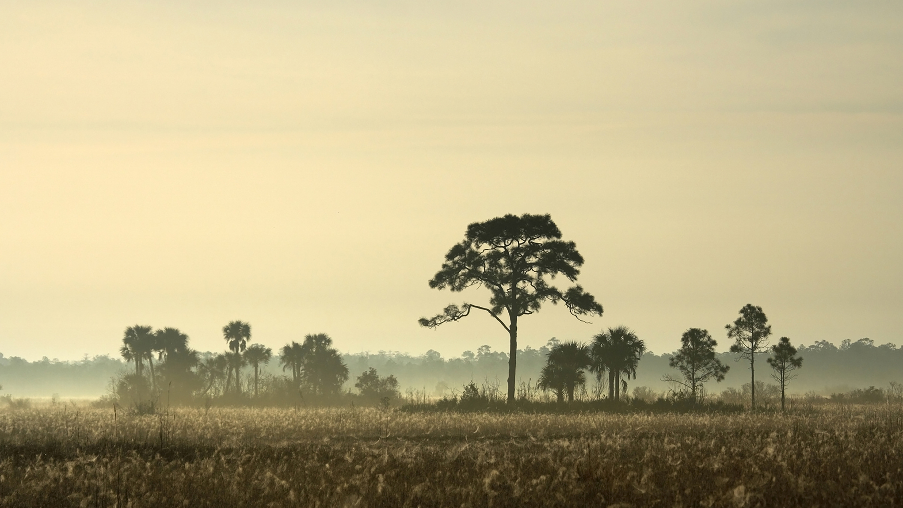 An early morning view of the trees from afar