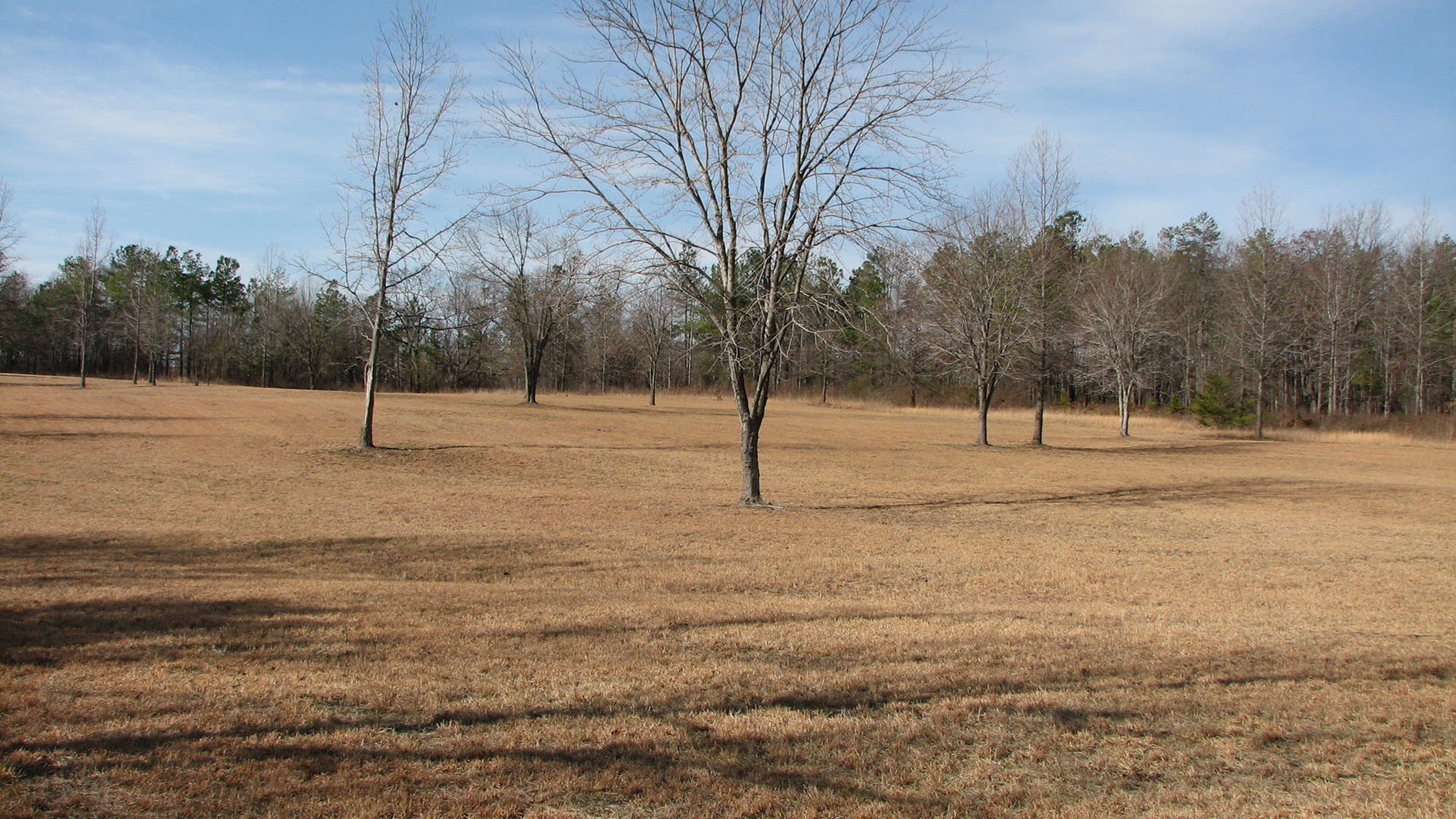 Field with trees