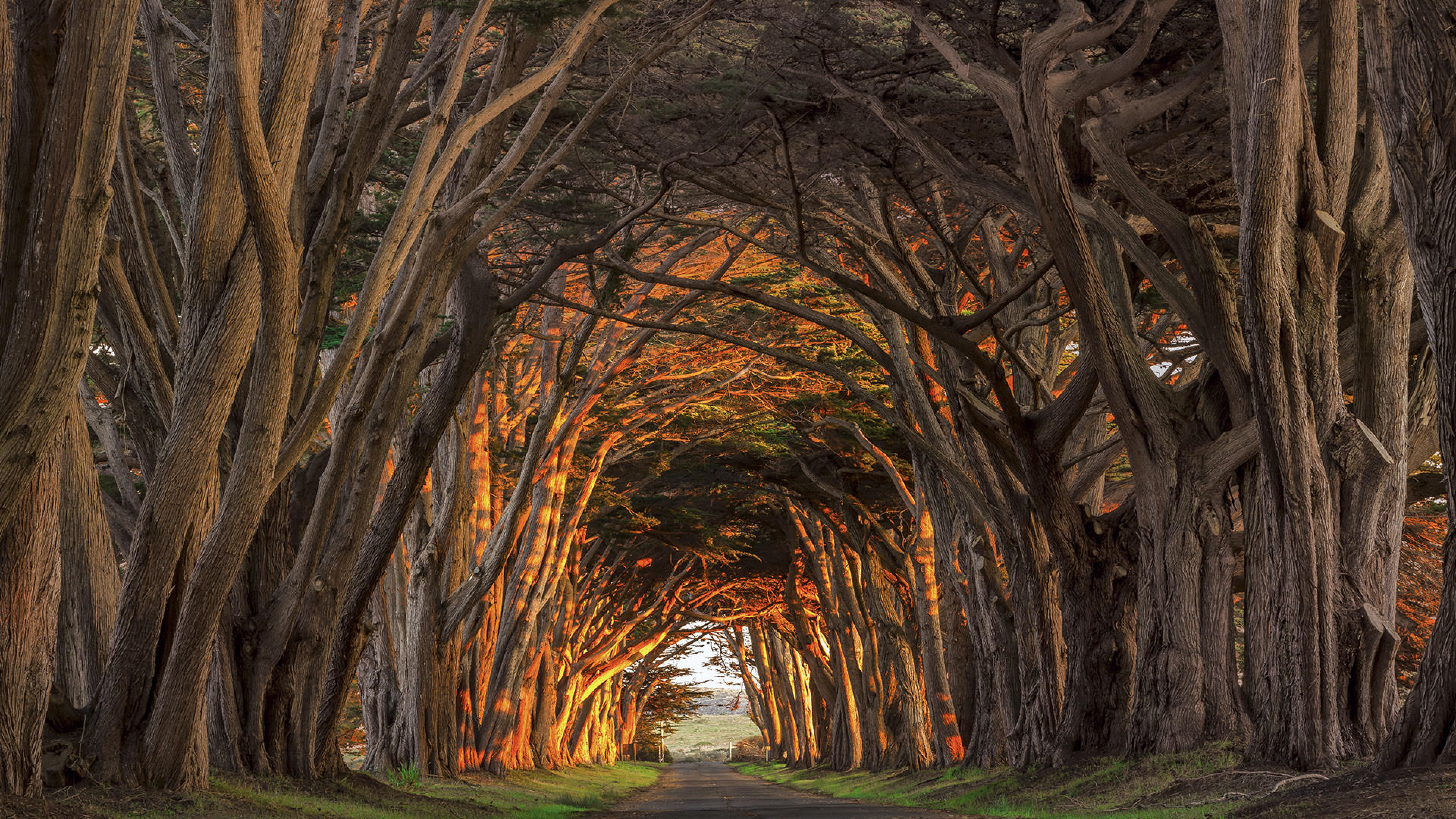 Old trees create a canopy of branches over road