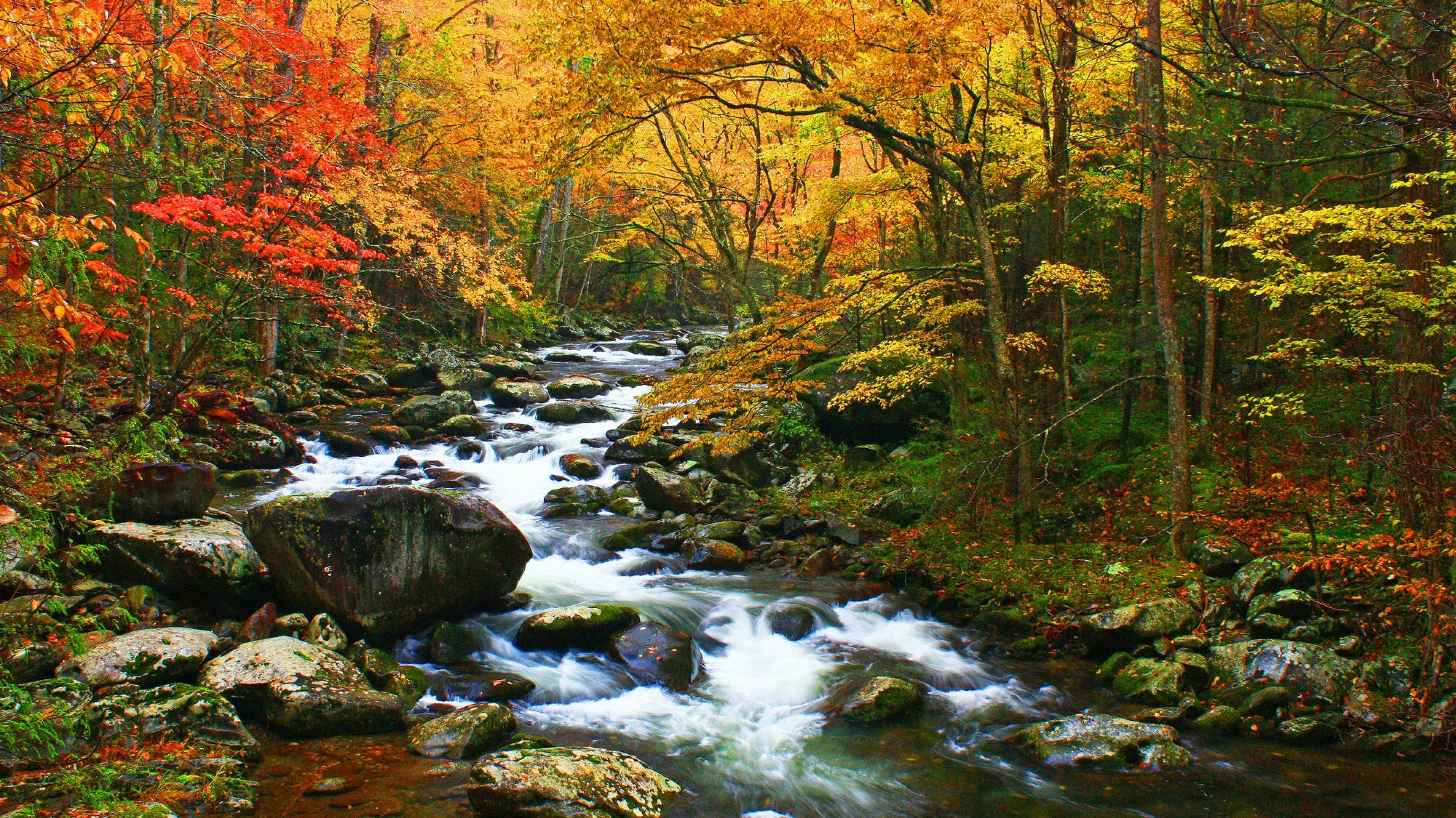 Waterfall and creek running through orange and red trees in Great Smoky Mountains National Park