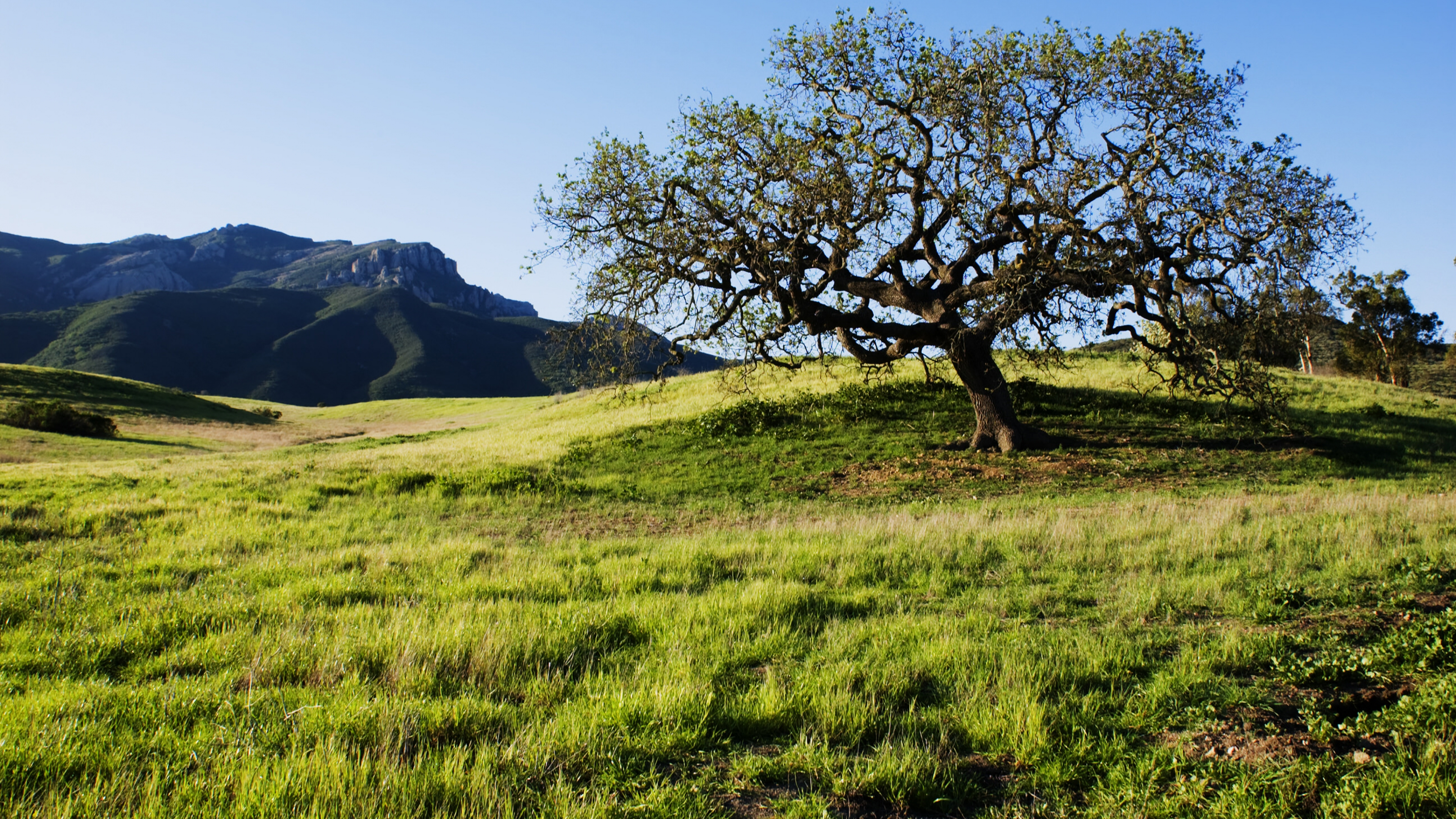 Green tree in a grassy field in the Santa Monica Mountains National Recreation Area