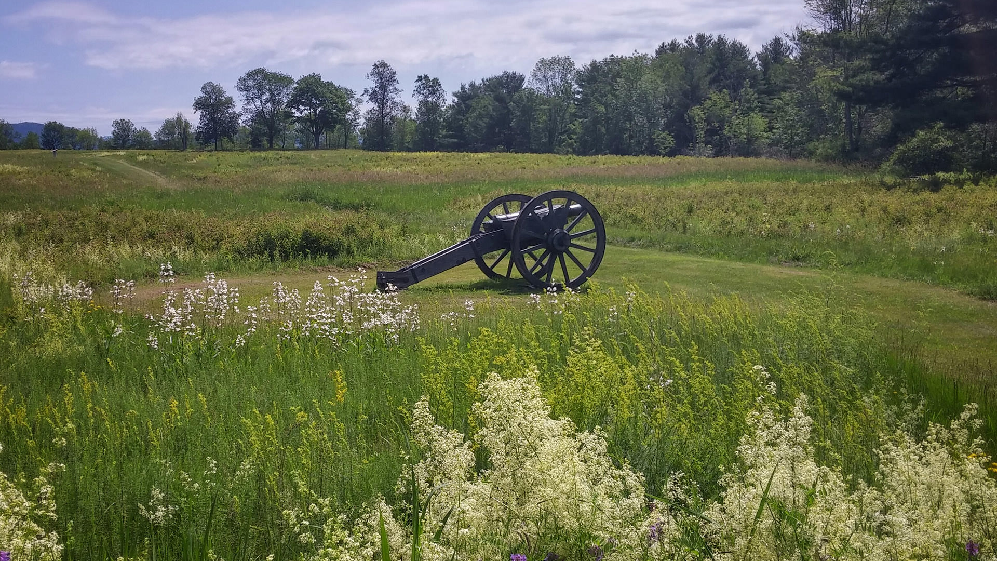 cannon in middle of field with wildflowers