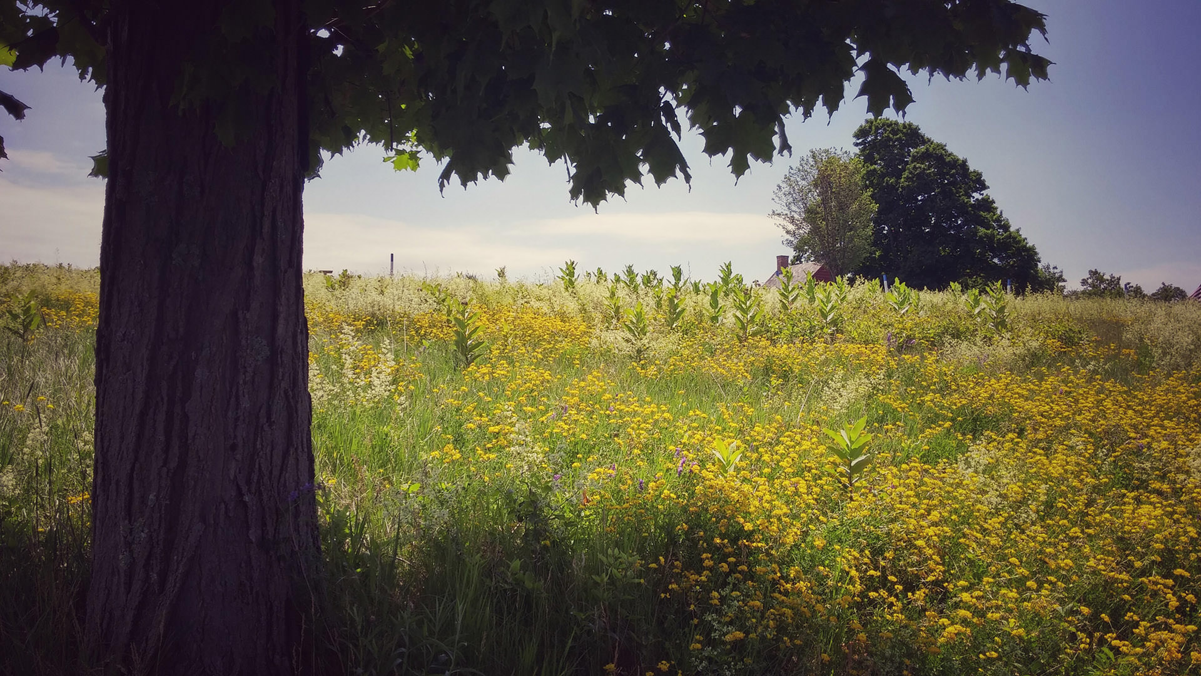 under shaded tree in field of wildflowers
