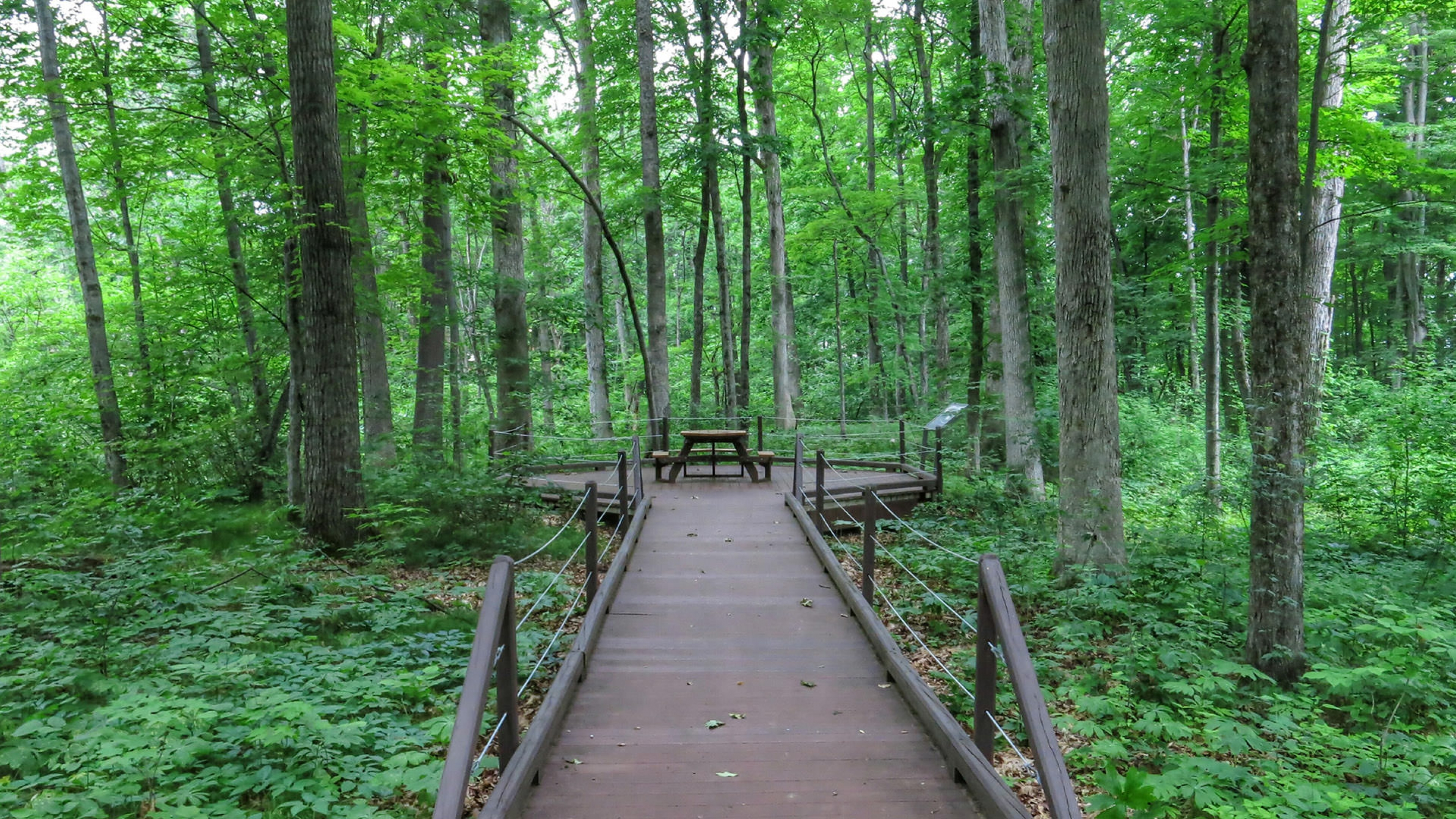 wooden deck walkway to picnic table in woods