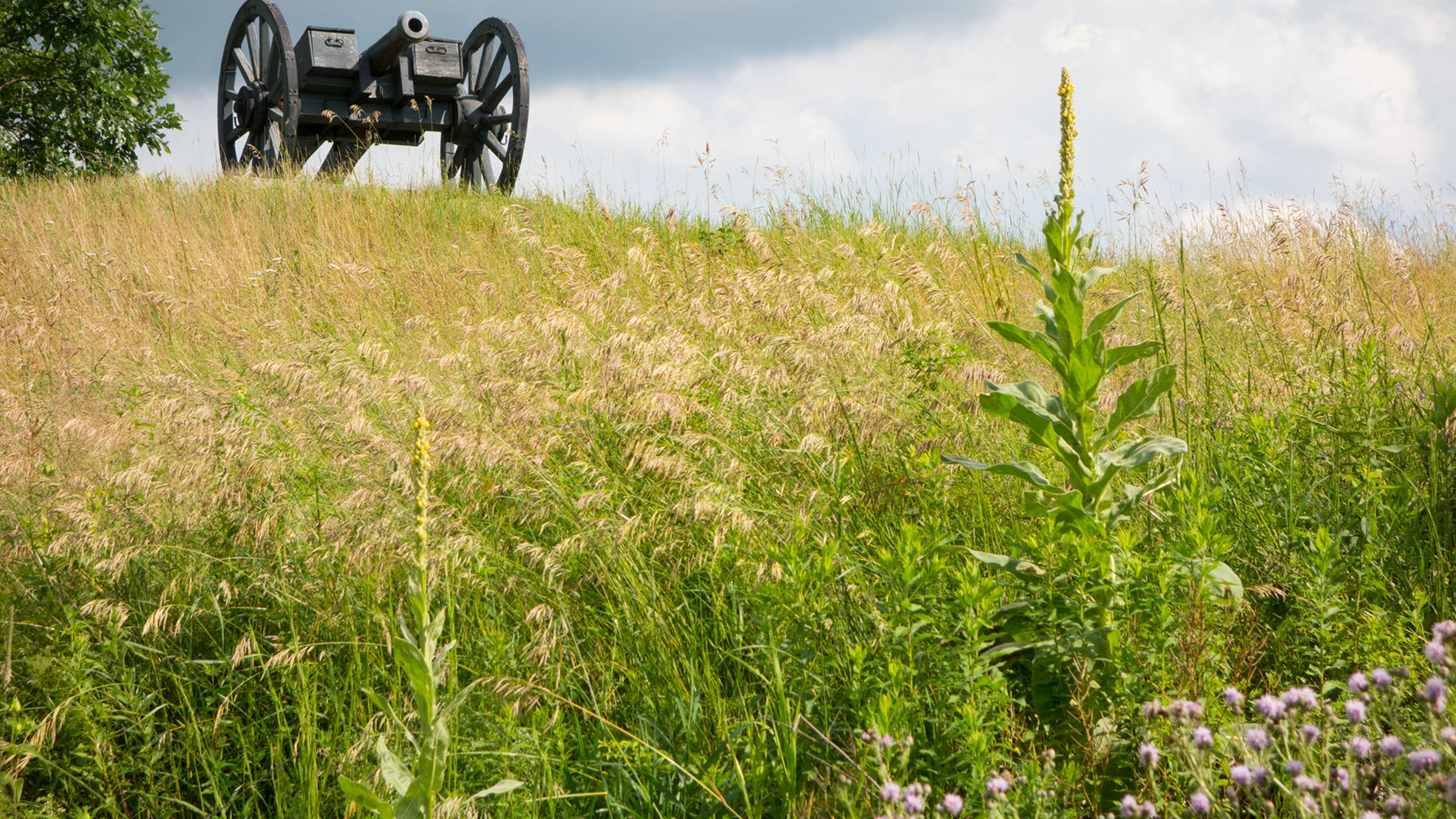 cannon overlooks hill with wildflowers